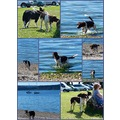 dogs collage Scotland