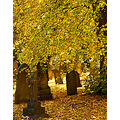 Autumn headstones light colour cemetery leaves UK