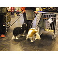 Dog pedigree Crufts show NEC Best fur pet company friend frend