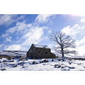 cumbria edenvalley garrigill snow house ruin derelict tree sky