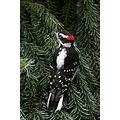 woodpecker downy burnaby bc canada