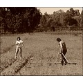 landscape tree field work woman man inland water documentary sepia