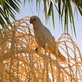 Baby Corella at sunset