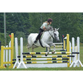 showjumping action horse