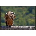 This Griffon vulture was photographed at a wildlife preserve in northern Israel.