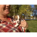 trixie boo biscut jrt jack russell terrier puppy me