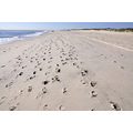 fireisland newyork ny lighthouse beach sand footprints