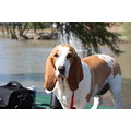 gone fishing with our basset