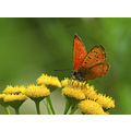 butterfly insects animals nature