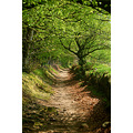 dartmoor path natsworthy manor devon
