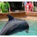 seaworld orlando florida dolphin people