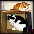 mypetfriday funfriday cats