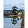 reflectionthursday bay harbour otago tree dunedin littleollie