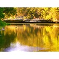 water creek eagle war skoenlaper fall reflections yellow