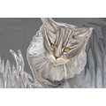digitalart storm maine coon cats liescatsclub