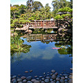 hayward japanese garden hjgfph japanesegarden pond koi bridge