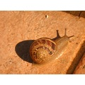 animal snail nature
