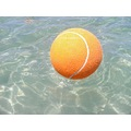 large tennis ball throw beach perth littleollie