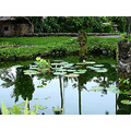 reflectionthursday pond hotel walk bali littleollie