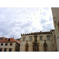 dubrovnik kroatia birds swallows