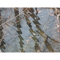 week 3 reflection distorted linden park sky trees foliage