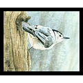 watercolor painting art nature bird nuthatch snow