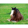 Resting horse !