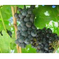 12/13