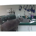 smokey checking out the vets office