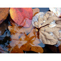 autumn leaves water colours reflections