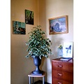 room corner plant paintings