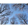 Trees sky frame branches
