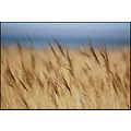 reeds nature coast colours somerset somersetdreams