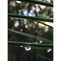 raindrop perth hills littleollie