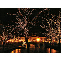 lights dark christmas leiden the hague holland jolie jeever