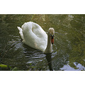 swan nature luxembourg