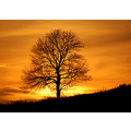 sunset tree sampford peverell devon