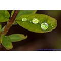 macro leaf rain beads water droplet