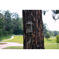 park greanery tree trunk bird house