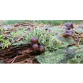Appelscha Autunm Mushrooms