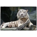 white tiger zoo