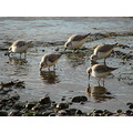 reflectionthursday nature plovers second beach vancouver bc jan 2012