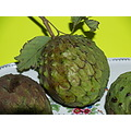 Custard-apple also called Bullock's heart, is the fruit from a tree Annona reticulata from my gar...