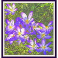 crocuses flowers digitalartclub