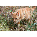 cat nature animal pet summer nikon sigma pleven bulgaria