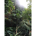 amazon rain forests washinton zoo wet hot flora