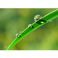 dew drops jett366 green leaf