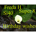 birthday wishes Freda super 8 si40