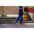 boy seagull chase forest place cbd perth littleollie