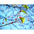 sky berries plants leaf nature tree branch